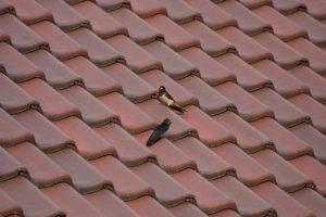 brick roofing